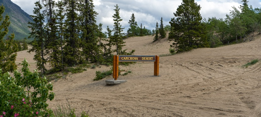 Carcross Desert – World's Smallest Desert